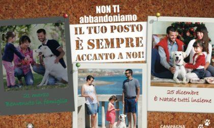 Comuni contro l'abbandono degli animali