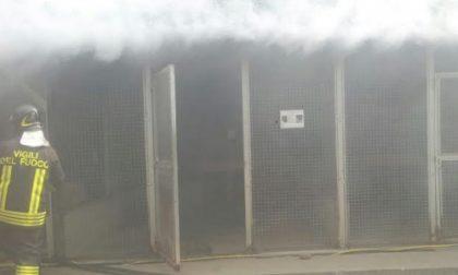 Incendio devasta il magazzino del Canile