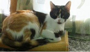 L'appello per ritrovare una gattina smarrita