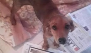 Trovata cagnolina, l'appello dei volontari al Canile