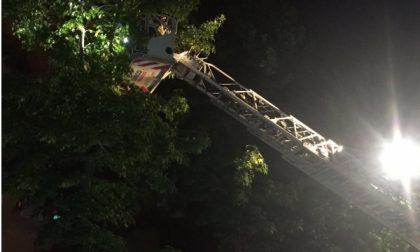 Gattino di sei mesi salvato dai pompieri