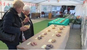 Le patate di montagna in mostra