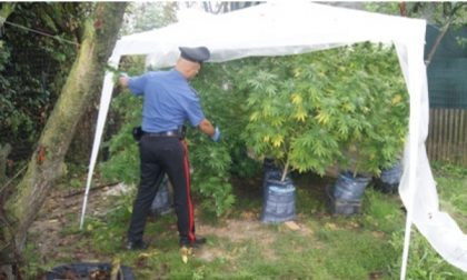 Trentenne coltivava marijuana: arrestato