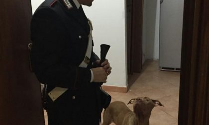 Ha chiuso per un giorno il cane sul balcone senza cibo e con la museruola: denunciata