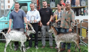 Le capre si sfidano nella finale regionale
