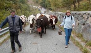 Mercato contadino; alla scoperta dei prodotti della montagna