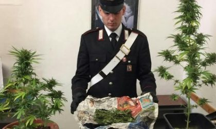Minorenne coltivava marijuana a casa