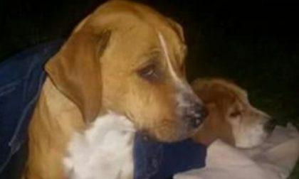 Cuccioli abbandonati in autostrada