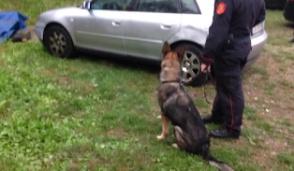 Il gruppo cinofili dei carabinieri di Volpiano trova la droga del pusher nascosta nell'armadio