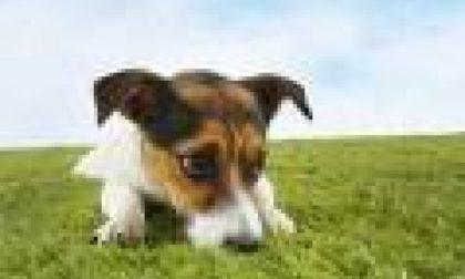 Pascoli vietati ai cani: mucche infette