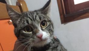 Trovato un gattino a Pont Canavese