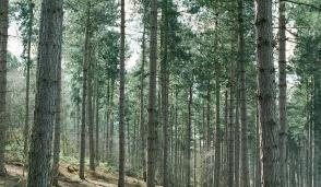 Consorzio forestale, al via la costituzione