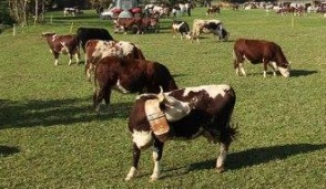 Torna la Fiera agricola primaverile di Castellamonte