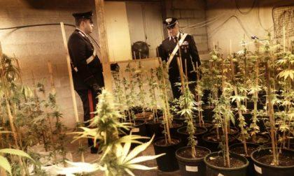 I carabinieri scoprono e chiudono una fabbrica di marijuana, due arresti