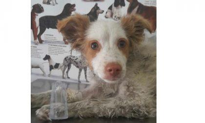 Salva per miracolo, la cagnolina Ninfea cerca casa