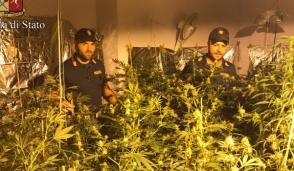Consuma più di 3mila euro in energia elettrica in pochi mesi: beccata coltivare  marijuana in casa