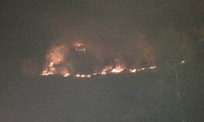 Bosco in fiamme pensionato nei guai