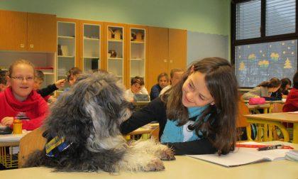 Cani a scuola bimbi a lezione di educazione cinofila