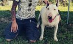 Raccolta firme Sid per far tornare a casa il Bull Terrier