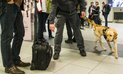 Aeroporto Caselle: sequestrate foglie  di coca