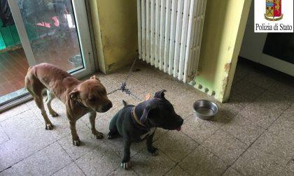 Sette cani abbandonati in casa, donna denunciata