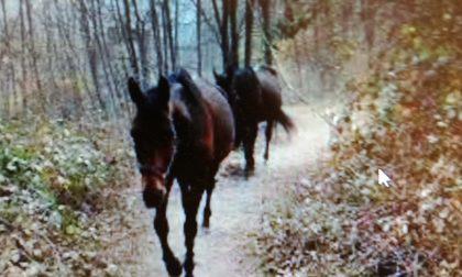 Rubato vecchio cavallo: mistero in Valle