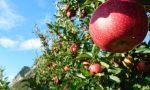 Corso di frutticoltura biologica per hobbisti a Rocca
