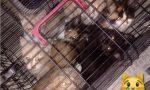 Quaranta gatti in cerca di casa, appello de Le Vibrisse