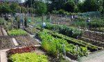 Cercasi coltivatori di orti urbani a San Maurizio