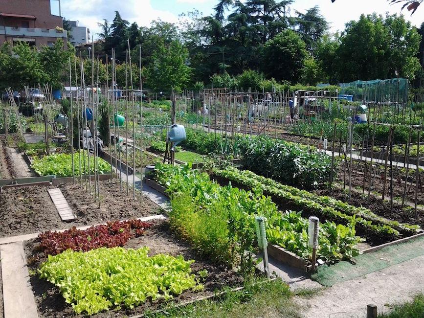 Cercasi coltivatori di orti urbani a san maurizio il canavese - Casa di cura san maurizio canavese ...