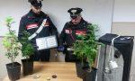 Controlli antidroga, scoperta coltivazione domestica di cannabis