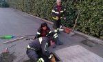 Cani salvati dopo la caduta in un tombino | Foto
