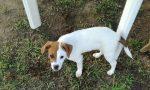 Rubata cucciola l'appello disperato dei proprietari
