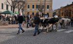 Fiera Agricoltura e commercio tra passato e futuro 2018 a Caselle
