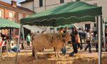 Agricoltura e Commercio. La fiera ritorna a Caselle oggi domenica 8 aprile
