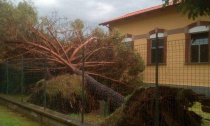 Nubifragio  danni sulla Vauda