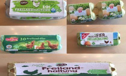 Allarme salmonella nelle uova: Penny Market smentisce