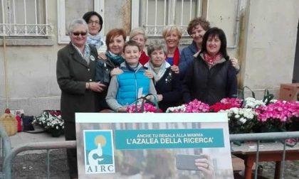 Leinicesi sostengono l'Airc acquistando le azalee