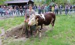 Rassegna Zootecnica a Locana parecchio partecipata