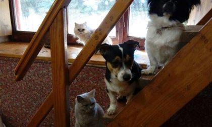 Ti SOSteniamo Onlus e Almo Nature per persone in difficoltà e loro animali