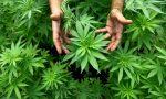 Cannabis light: i canapa shop non chiuderanno ma servono regole