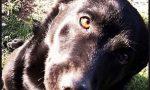 Campagna contro l'abbandono degli animali a Cuorgnè