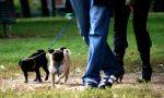 Anche i cani si sballano al parco mangiando la droga nascosta