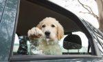 Cane in auto sotto il sole, denunciato proprietario