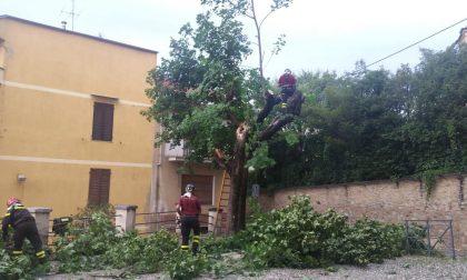 Raffiche di vento a Castellamonte: albero crollato vicino a palazzo Botton