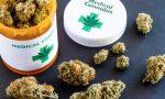 Cannabis terapeutica: in Piemonte triplicato l'uso
