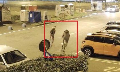 Bicicletta rubata a Borgaro, grazie alle telecamere individuato il colpevole