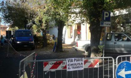 """Taglio degli alberi a Rivarolo, interviene l'Associazione """"non bruciamoci il futuro"""""""