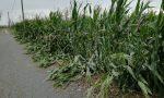 Agricoltura in ginocchio dopo il maltempo, lo sfogo degli imprenditori