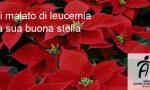 Ciriè, Stelle di Natale contro la leucemia